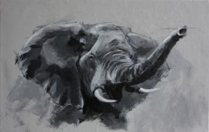 2013 02 01 Tete Elephant by jibudp
