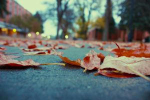 Fallen leaves by shahriaremil