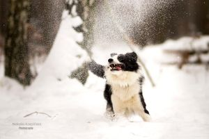 It's snow! by Dog-Paw