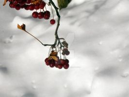 Snow Berries by TwinkleCarnage
