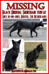 MISSING BLACK ORIENTAL SHORTHAIR TOMCAT from NL by BlackMysticA