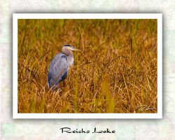 Reichs Lake Heron by Merlinstouch