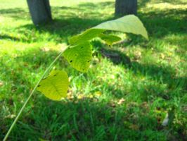 stick of leaves 4 by ElleStock