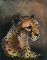 Cheetah by Enchantress-LeLe