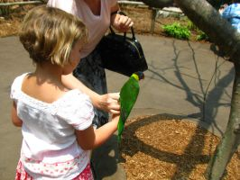 Feed the birds tuppence Nashville Zoo 5 by TheNormal1