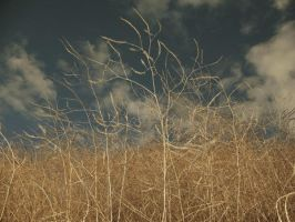untitled, flash + grasses by mgilpin