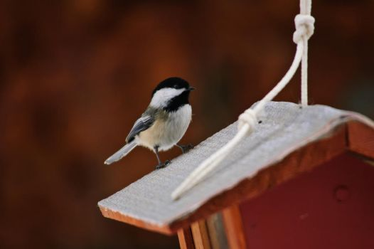 Chickadees On A Cool Winter Afternoon by benwubbleyou