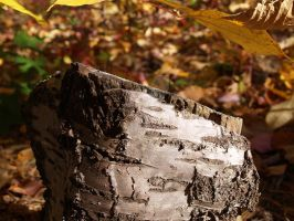 Lonly Stump by EdElricsGirl