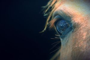 I See You by wildhorsedreams