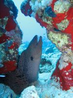 Moray Eel by Cicciobello-BoBo