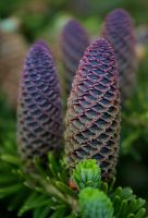Cones by nectar666
