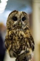ickle owl by nicky