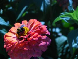 The bumble bee meets orange by GiveMeAnIdea