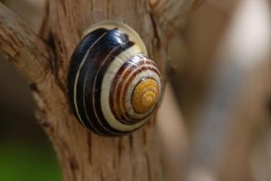 Little Snail 2 by Marina17