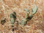 2015-0411-002 Cactus person in the tall grass by czoo