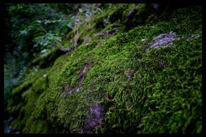 moss carpet by Terza