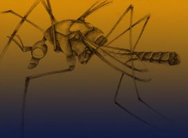crane fly by Chill-morte