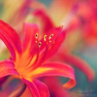 life is a flower. by magnesina