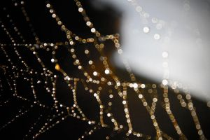 Spider Lights by DanWilliamsPhoto