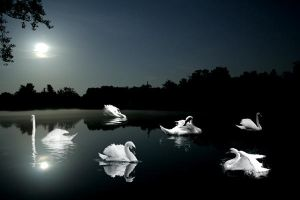 Swan Lake by midnightstouch