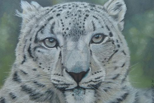 Snow Leopard - Pastel Painting by theArtofsilviafrei