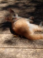 Innocence of a Kitten by TheRaptorAlpha