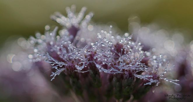Gentle Morning Jewels by wendy-pellerito