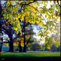 autumn Gold . by iliushka