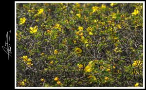 Yellow by ODRA2006