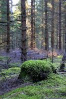 Swedish Woodland 4 by Avahlon-Stock