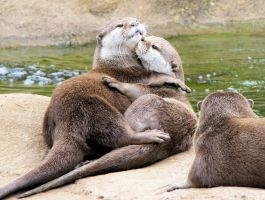 Otter love by Vitaloverdose