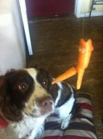 Woody wants carrot fish by Kayleigh-Kaz