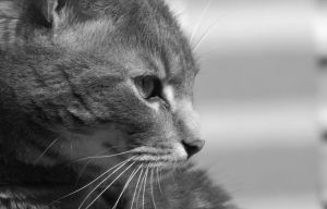 Leo -Black and White by Marievarp