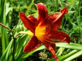 Flower after Rain by TheGigglingBookworm