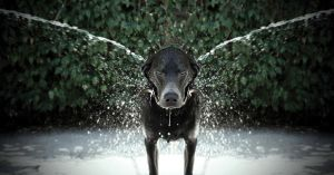 Dog's wash by DavidBenoliel