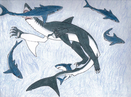 Shark Week: Great White by DRAGONLOVER101040