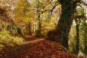Belvoir Forest Path, Autumn II by Gerard1972
