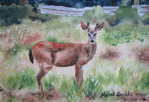 1. Deer in the Field by Masasasaki