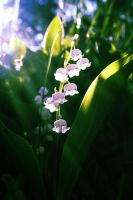 Lilly of the valley by Kamira994