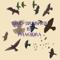 Bird Brushes by phaeidra
