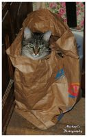 Cat In A Sack! by TheMan268