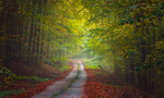 Autumn Road V by ferrohanc