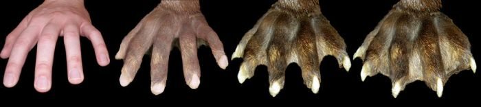 Otter Paw Transformation by KSchnee