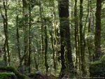Forest light 3 by Starsong-Studio