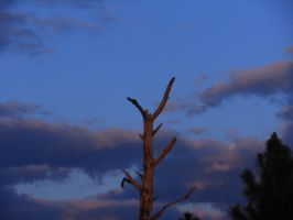 A Lone and Broken Tree by willow1894