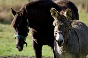 Horse and Donkey by OniPhotography