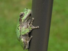 Treefrog by WhimsyBridges