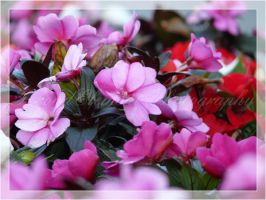 Pink Blossoms by DragonX141