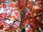 A Tree in Fall by abbi34