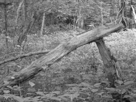 downed tree 02 by dcretch57